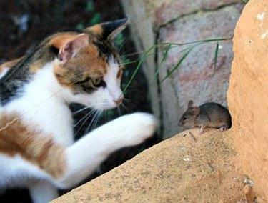 Raw Food and Outdoor Cats, What About Worms?