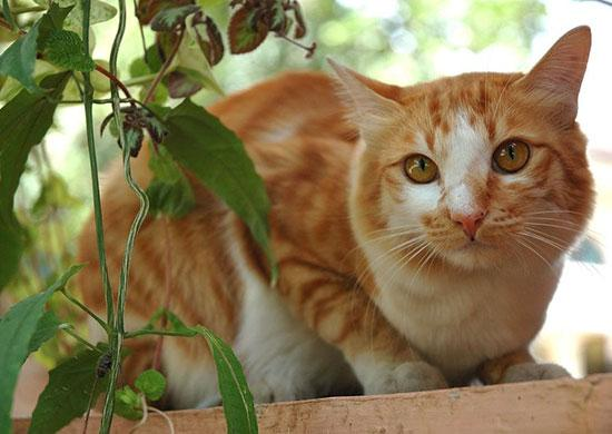 A Diet For Your Cat S Urinary And Kidney Health