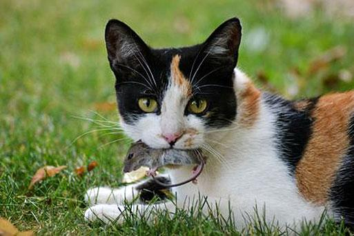 Good Food For Kidney Disease In Cats