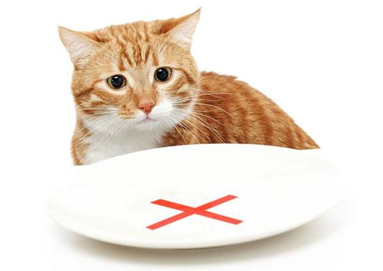 raw food diet for cats with diabetes