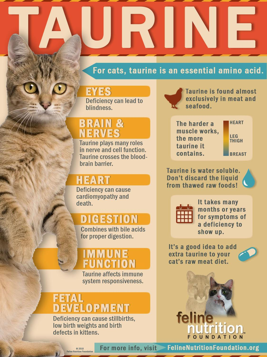 Taurine For Cats What Foods Is It In