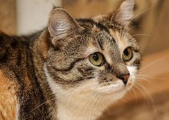 Choosing the Right Insulin for Your Diabetic Cat