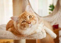 The Importance of Calcium Supplements in Homemade Cat Food